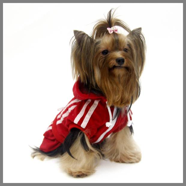 Red dog dress image