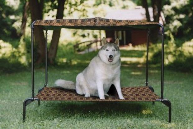 Outdoor canopy dog bed - Outdoor Canopy Dog Bed – WhereIBuyIt.com